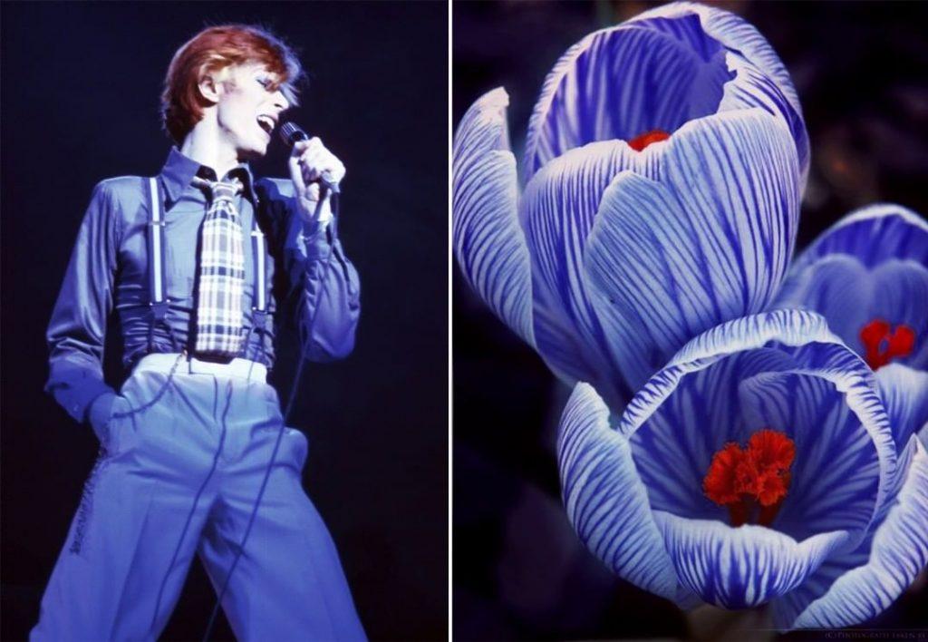 #13 | David Bowie As Flowers | Zestradar