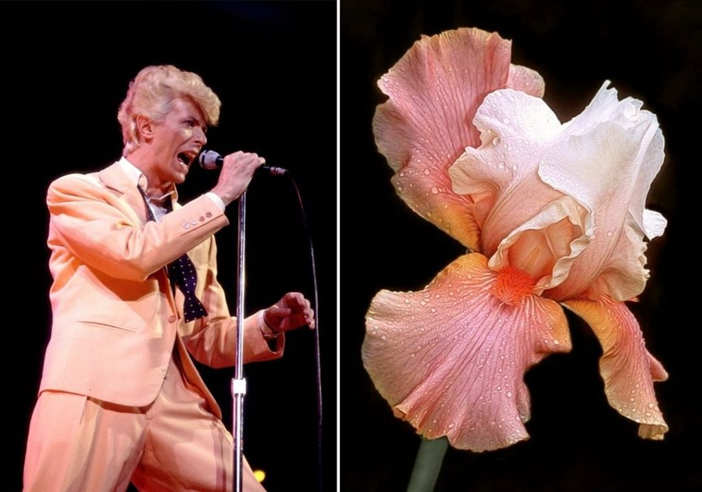 #2 | David Bowie As Flowers | Zestradar