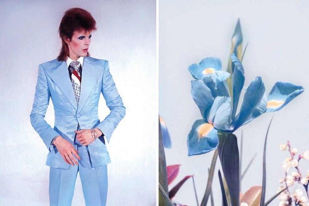 #5 | David Bowie As Flowers | Zestradar