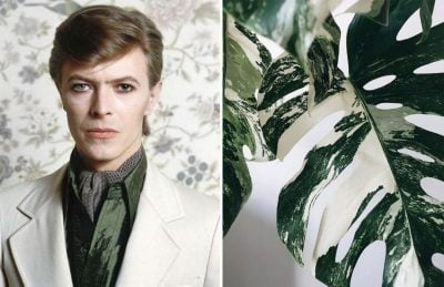 David Bowie As Flowers | Zestradar