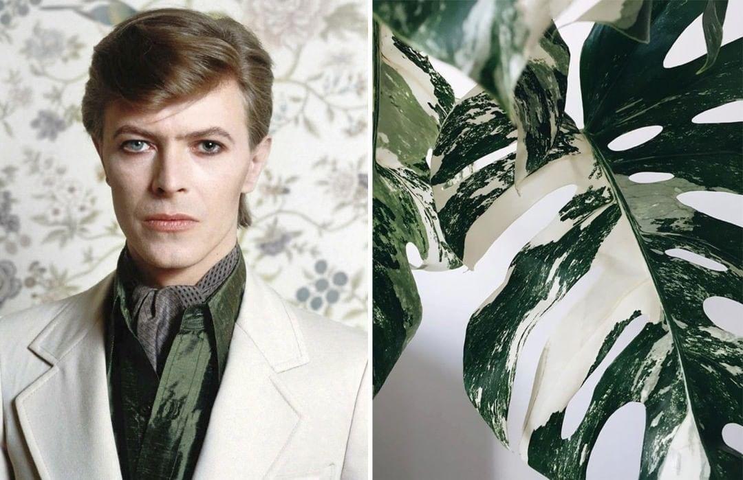 David Bowie As Flowers | Zestradar