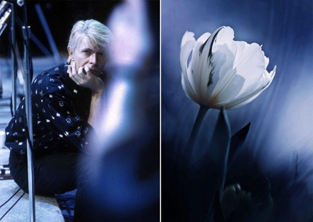 Тюльпан. | Дэвид Боуи и цветы: 15 волшебных портретов музыканта | Zestradar
