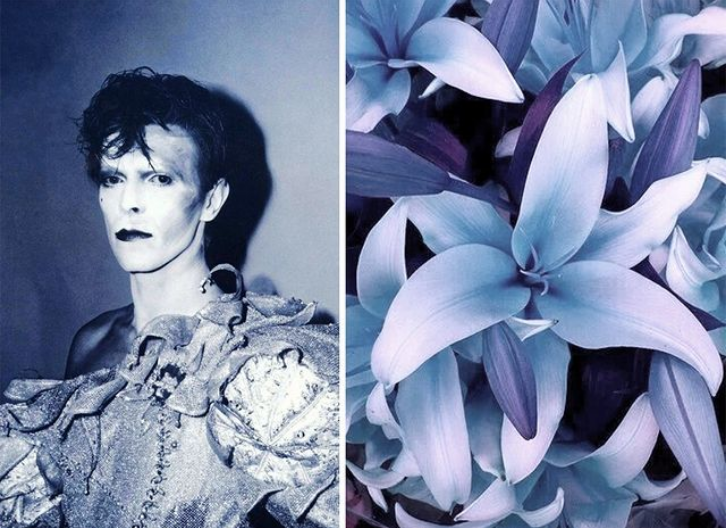 Лилия. | Дэвид Боуи и цветы: 15 волшебных портретов музыканта | Zestradar