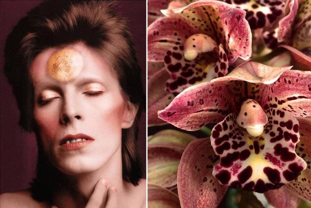 Орхидея. | Дэвид Боуи и цветы: 15 волшебных портретов музыканта | Zestradar