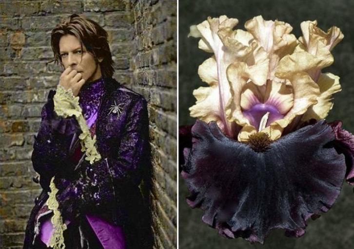 Ирис. | Дэвид Боуи и цветы: 15 волшебных портретов музыканта | Zestradar