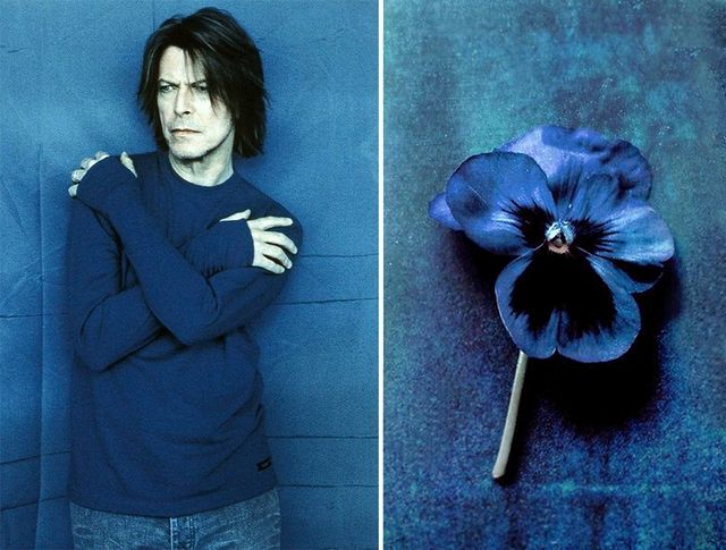 Фиалка. | Дэвид Боуи и цветы: 15 волшебных портретов музыканта | Zestradar