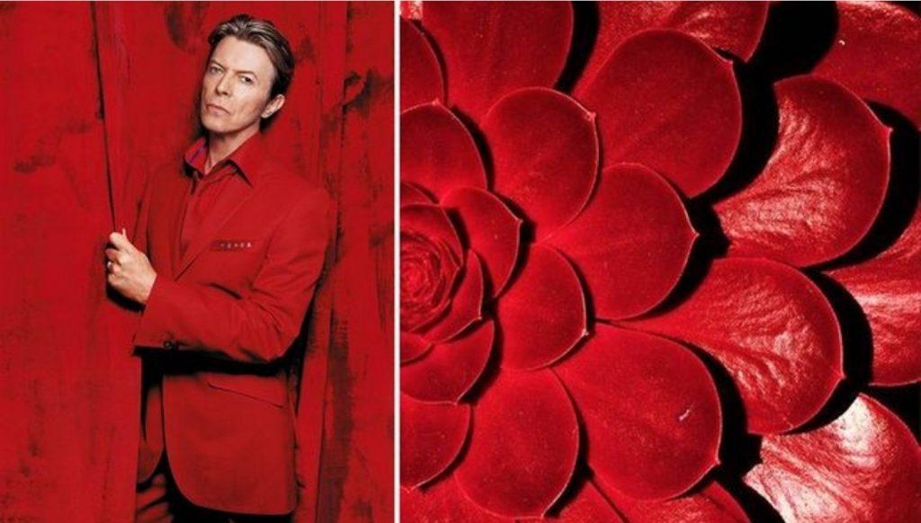 Красный суккулент. | Дэвид Боуи и цветы: 15 волшебных портретов музыканта | Zestradar