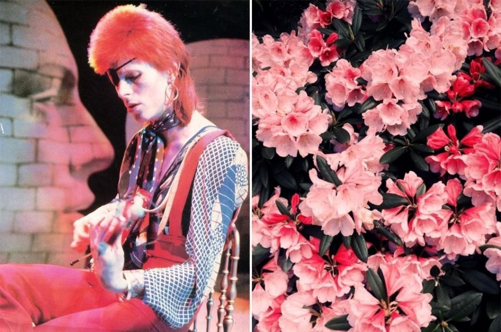 Тубероза. | Дэвид Боуи и цветы: 15 волшебных портретов музыканта | Zestradar