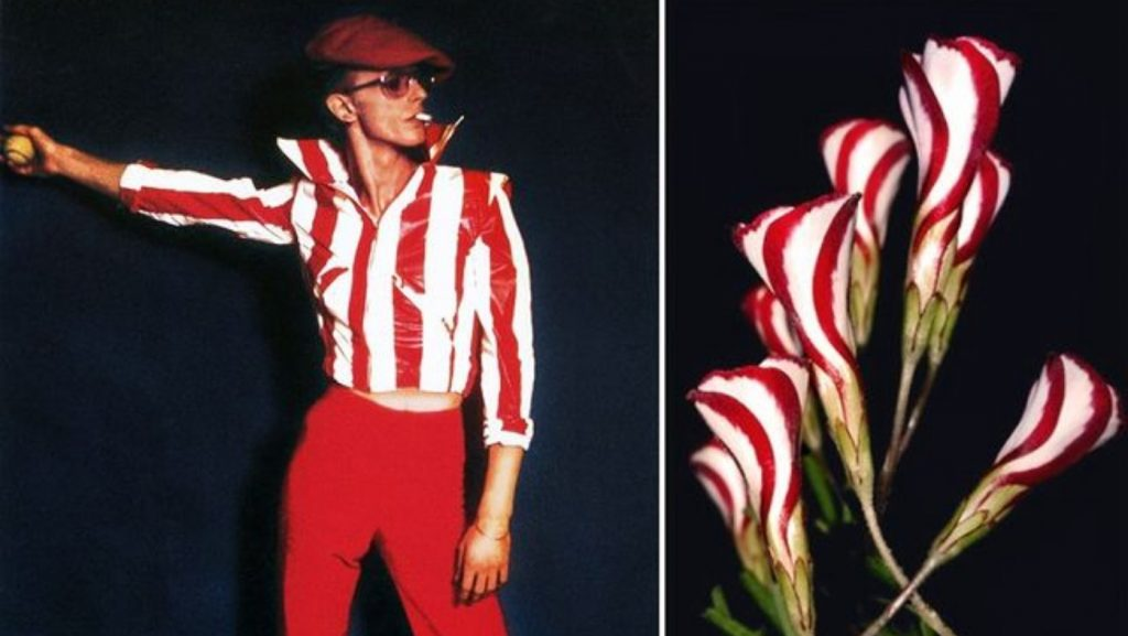 Оксалис.. | Дэвид Боуи и цветы: 15 волшебных портретов музыканта | Zestradar