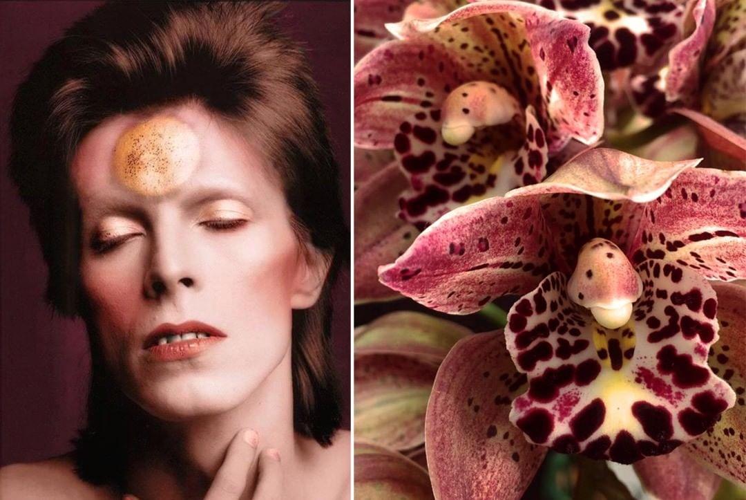 Дэвид Боуи и цветы: 15 волшебных портретов музыканта | Zestradar