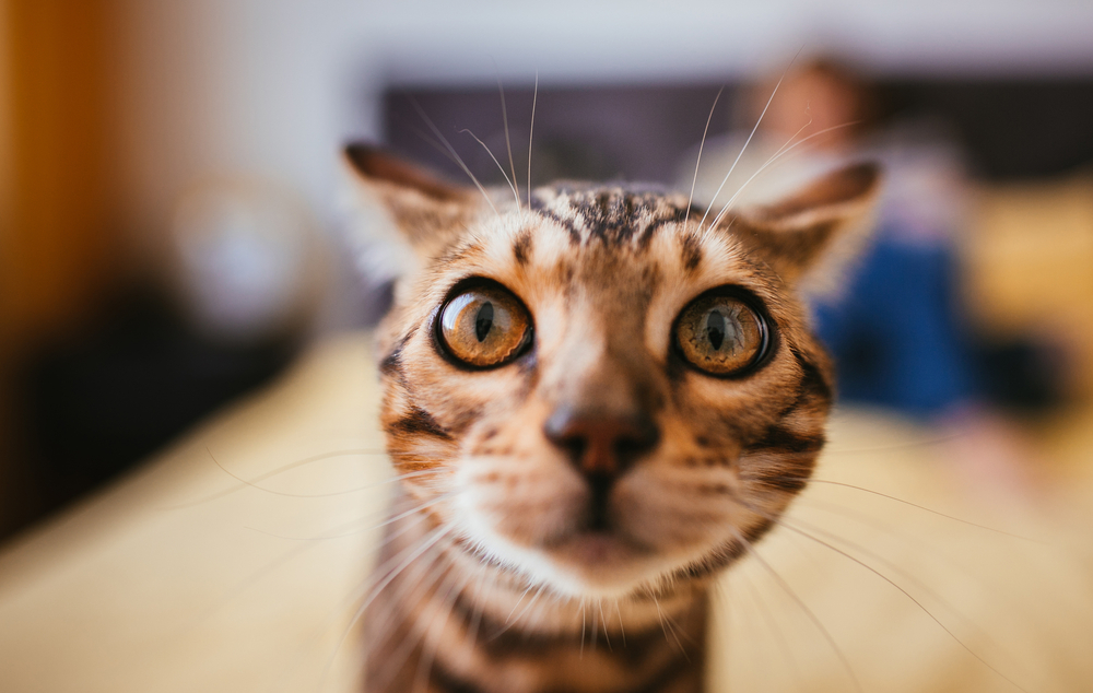 #1 | 8 Perfect Reasons to Adopt a Cat Now | Zestradar