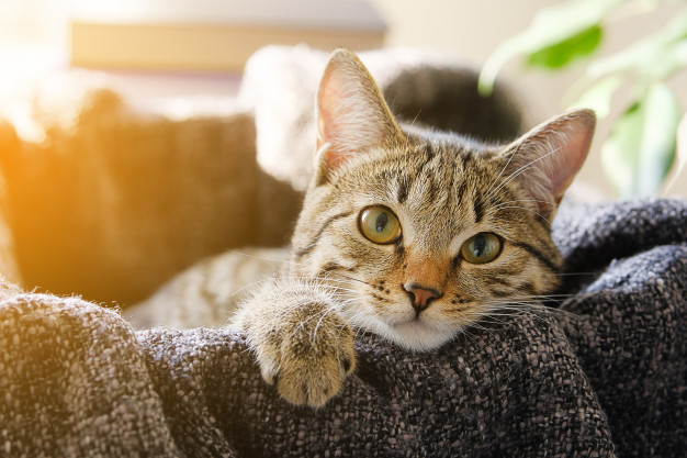#2 | 8 Perfect Reasons to Adopt a Cat Now | Zestradar