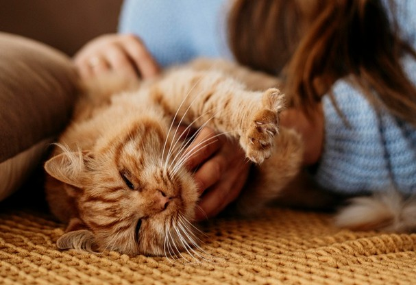 #3 | 8 Perfect Reasons to Adopt a Cat Now | Zestradar