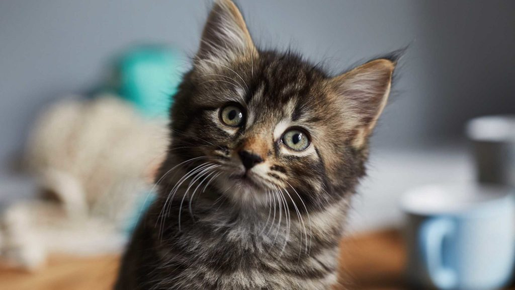 #8 | 8 Perfect Reasons to Adopt a Cat Now | Zestradar