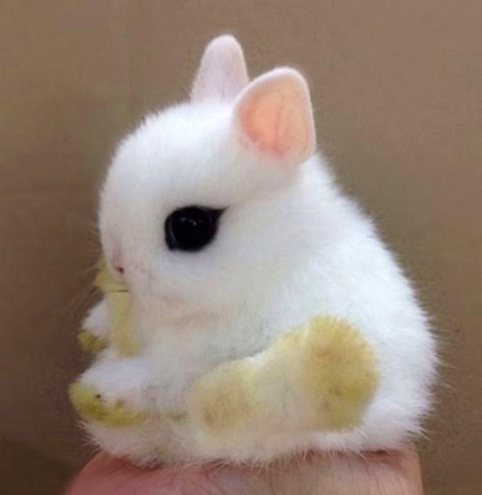 Карликовый кролик   10 самых маленьких в мире животных, которые у любого вызовут улыбку и умиление   Zestradar