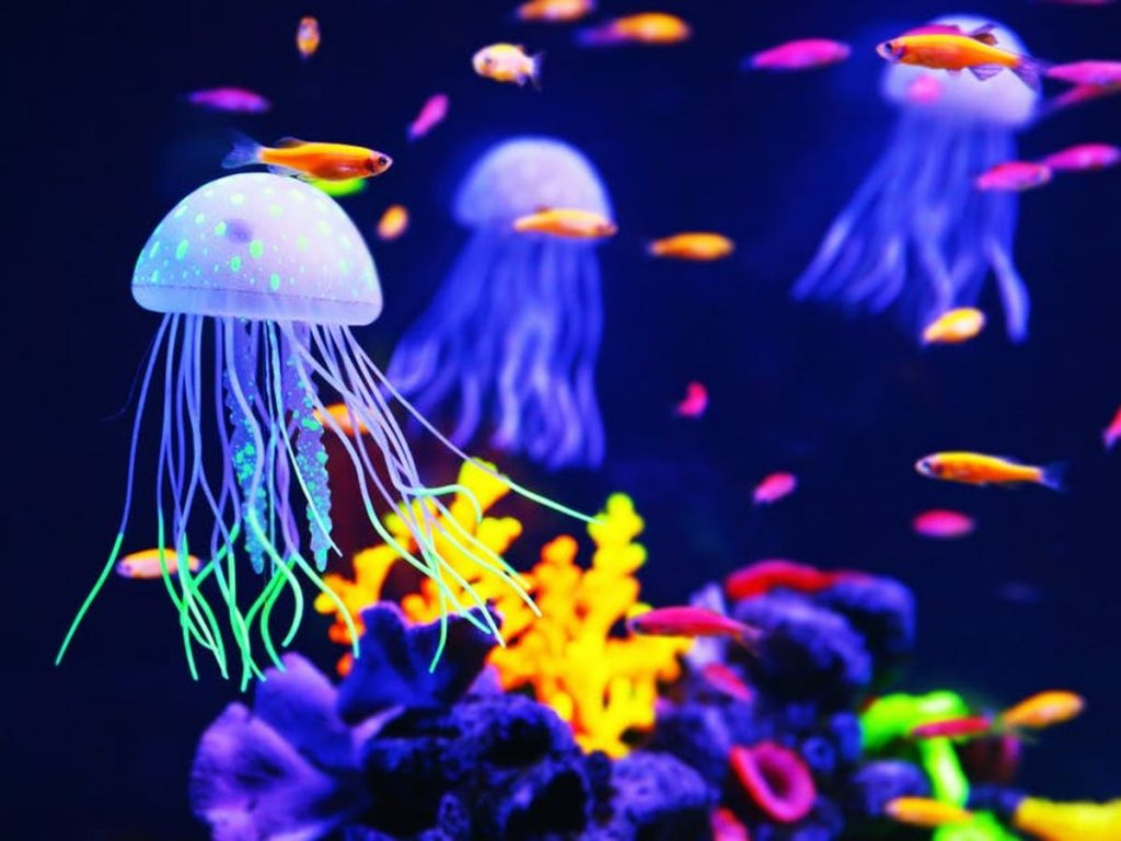Jellyfish | 10 Animals With Abilities That Put Your Superpowers to Shame | Zestradar
