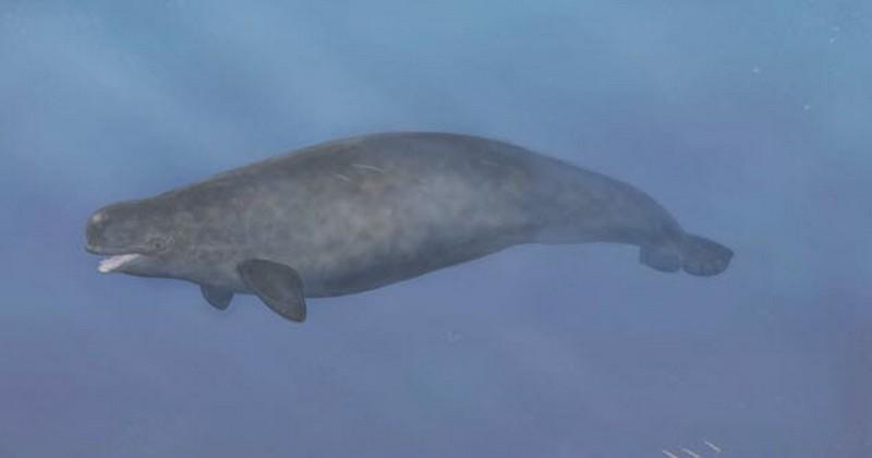 Beluga-Narwhal Hybrid | 7 Rare Quirks Found in Nature | Zestradar