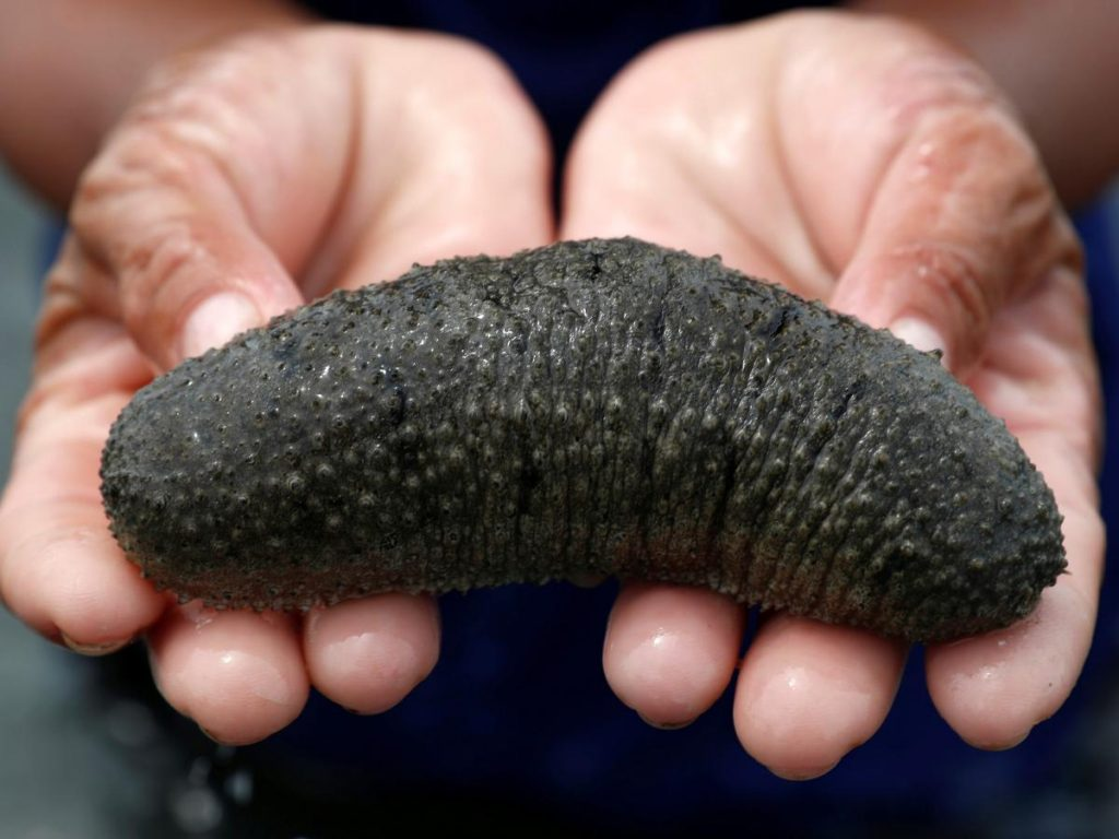 Sea cucumber | 10 Animals With Abilities That Put Your Superpowers to Shame | Zestradar