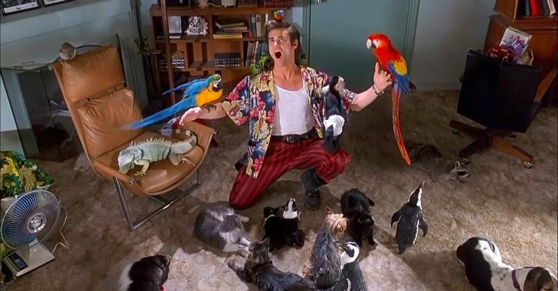#2 | Ace Ventura 3: What We Know So Far  | Zestradar