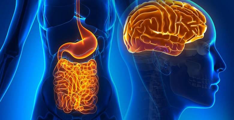 Что такое брюшной мозг? | Кишечник и мозг: как еда влияет на наше настроение | Zestradar