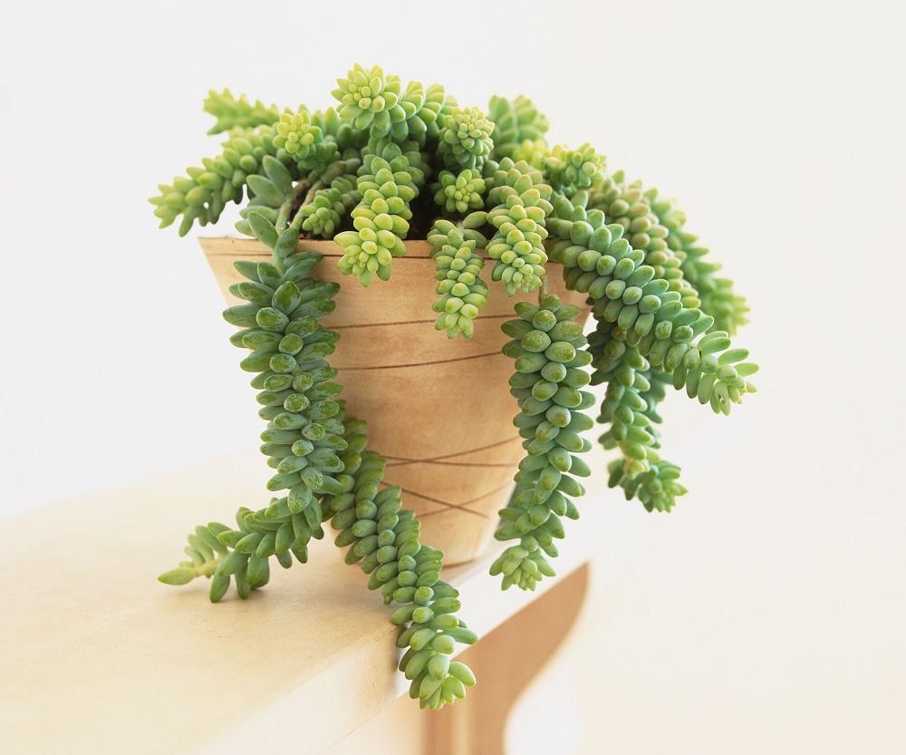 #1 | 10 комнатных растений, которые идеально подойдут для ванной комнаты | Zestradar