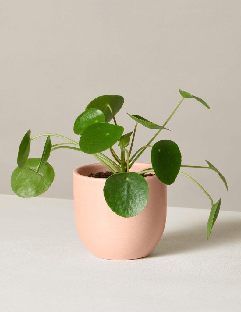 #10 | 10 комнатных растений, которые идеально подойдут для ванной комнаты | Zestradar