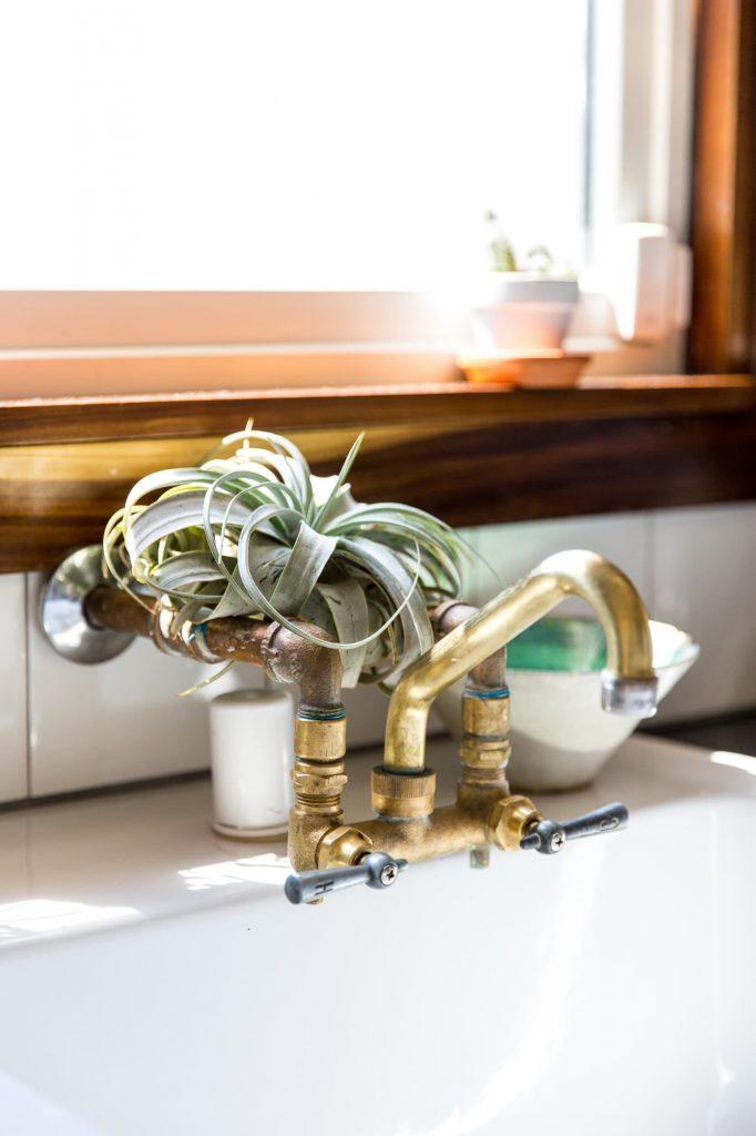 #2 | 10 комнатных растений, которые идеально подойдут для ванной комнаты | Zestradar