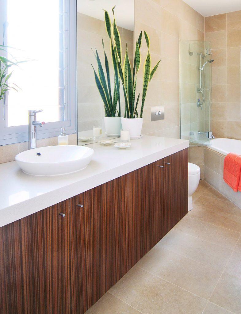 #4 | 10 комнатных растений, которые идеально подойдут для ванной комнаты | Zestradar