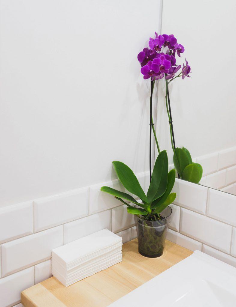 #6 | 10 комнатных растений, которые идеально подойдут для ванной комнаты | Zestradar