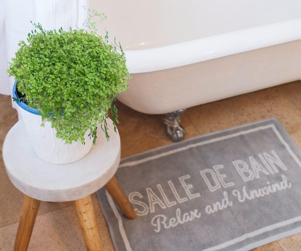 #7 | 10 комнатных растений, которые идеально подойдут для ванной комнаты | Zestradar