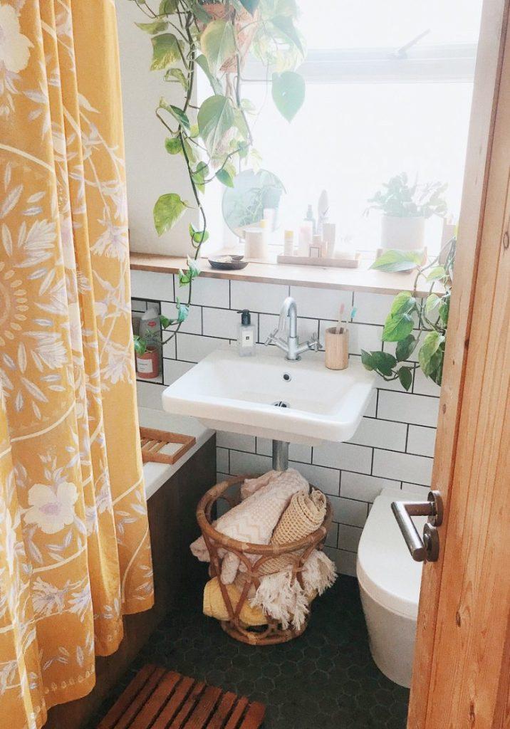 #8 | 10 комнатных растений, которые идеально подойдут для ванной комнаты | Zestradar