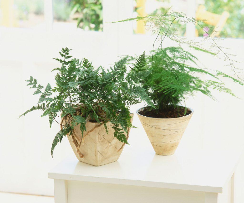 #9 | 10 комнатных растений, которые идеально подойдут для ванной комнаты | Zestradar