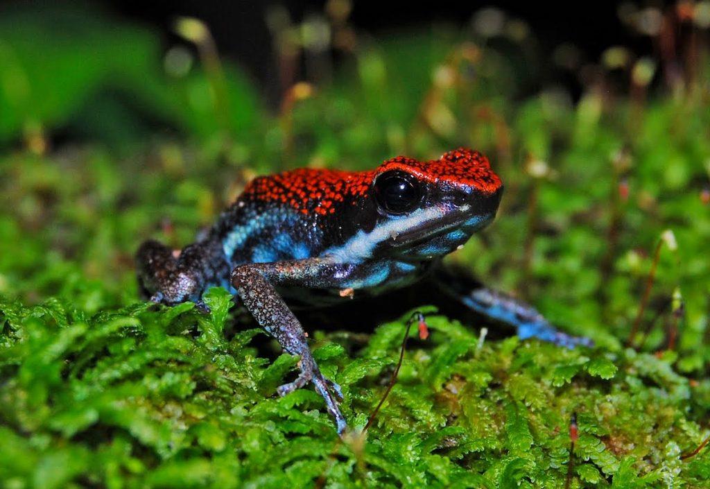 Poison Dart Frog | 8 Adorable Animals That Are Surprisingly Dangerous | Zestradar