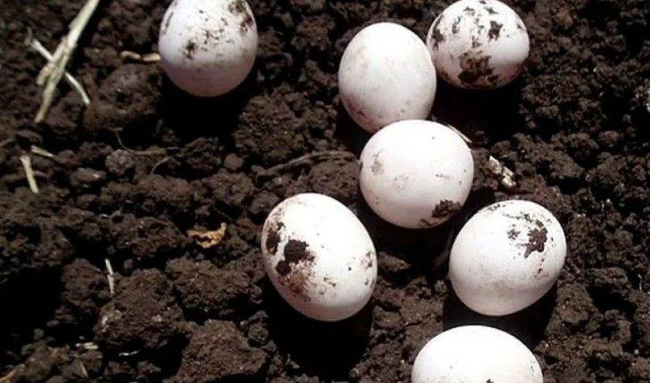 Яйцо | Проверьте, нет ли на вас порчи: 9 верных признаков |   Zestradar